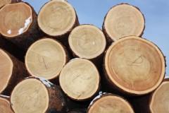 древесина сосна